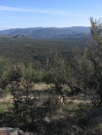 Gila_national_forest